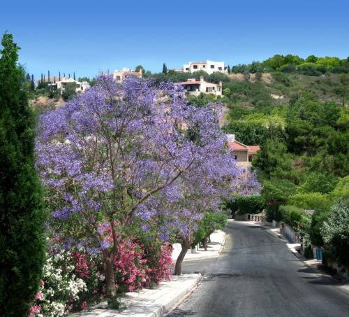 Kamares Village-Spring time